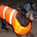 Спасательные жилеты для Собак